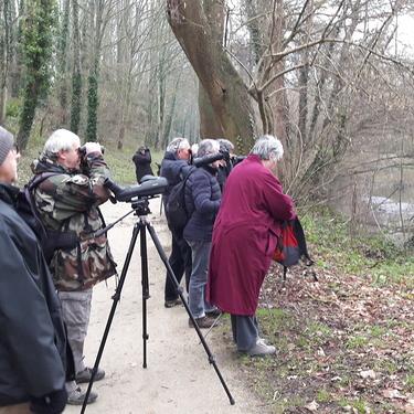 Observer les oiseaux le long de l''étang, dimanche 27 janvier à partir de 9h