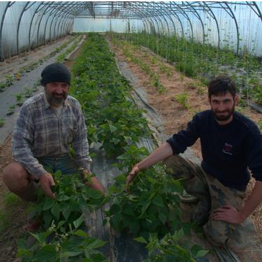 Pour l''aider à produire d''avantage pour l''AMAP, achetez un panier de légumes à Jonathan Chabert