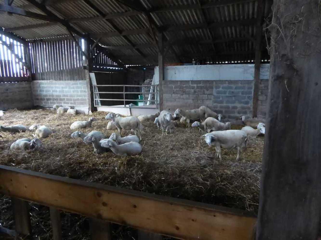 Les Robios découvrent le GAEC de Quinrouet et l''agriculture bio p1020843