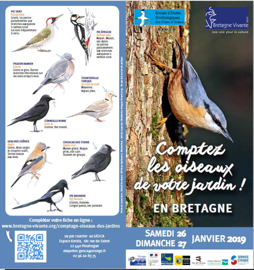 Comptage des oiseaux 2019 0